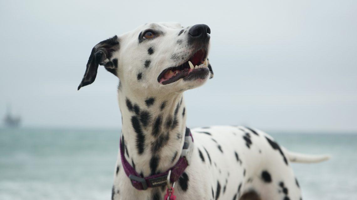 Zahngesundheit Haustiere